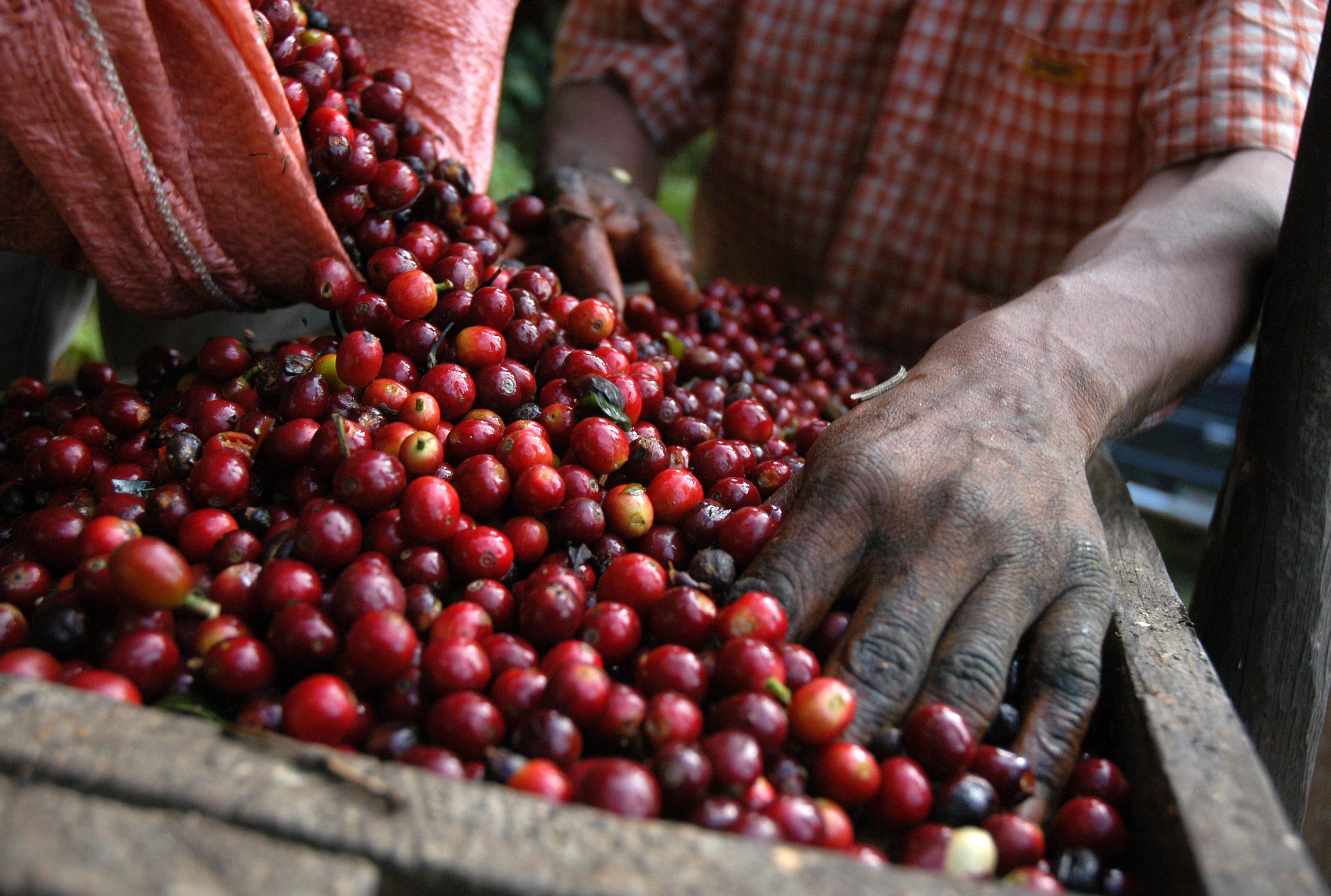 rode koffiebes